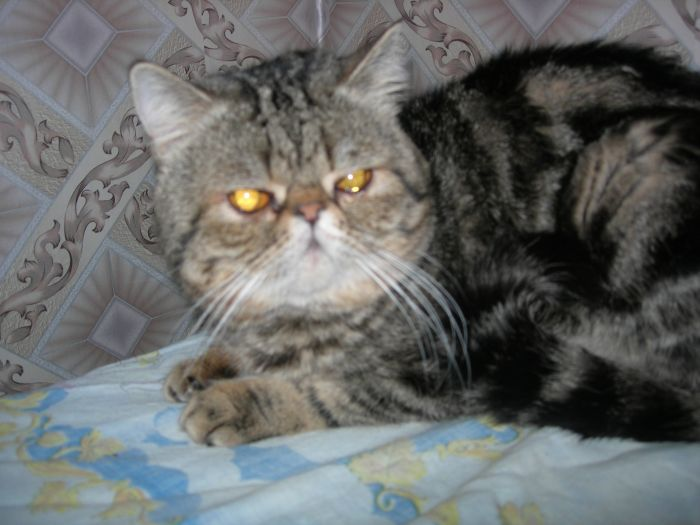 Коты для вязки в уфе